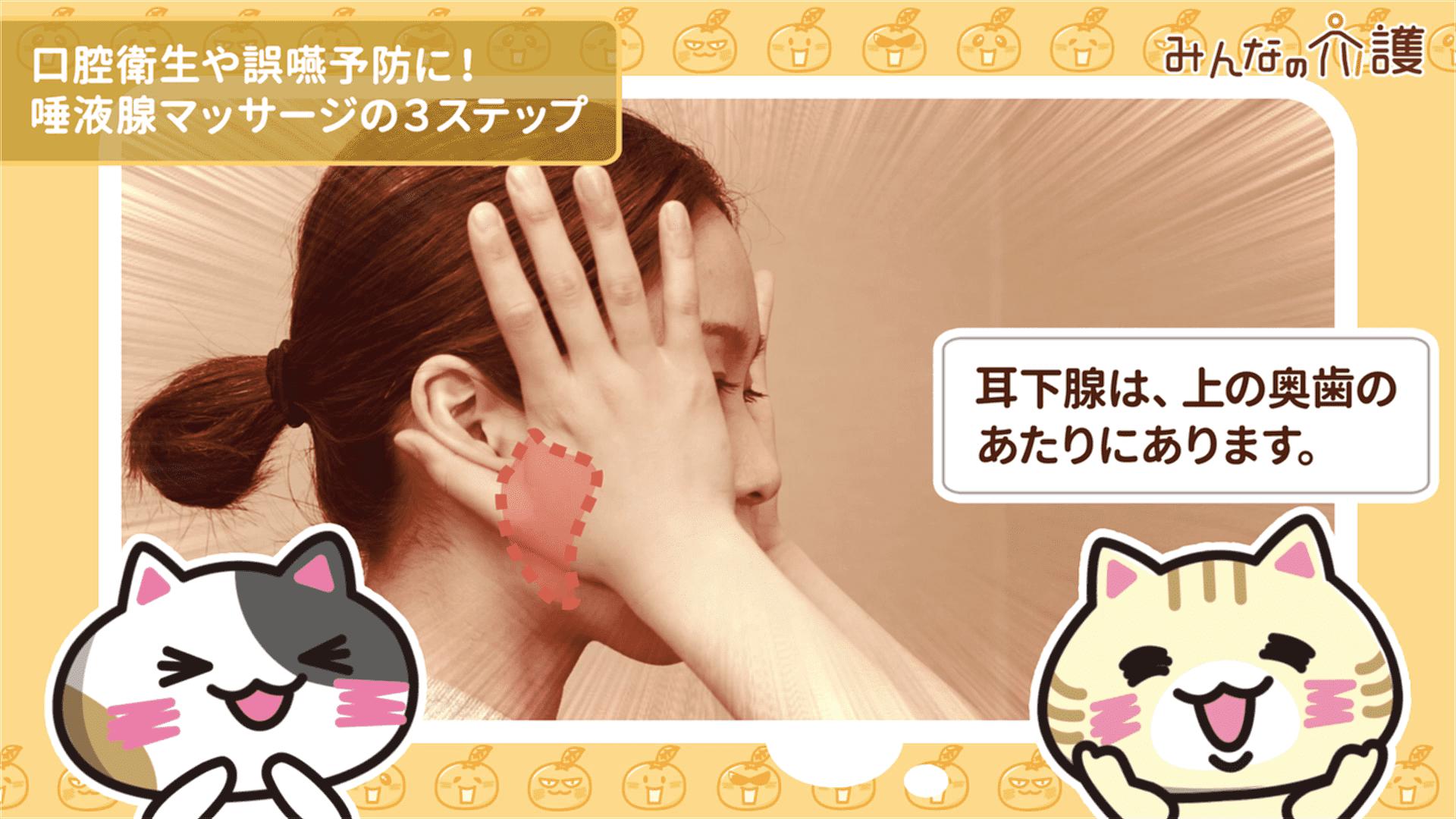 耳下腺の位置のイメージ
