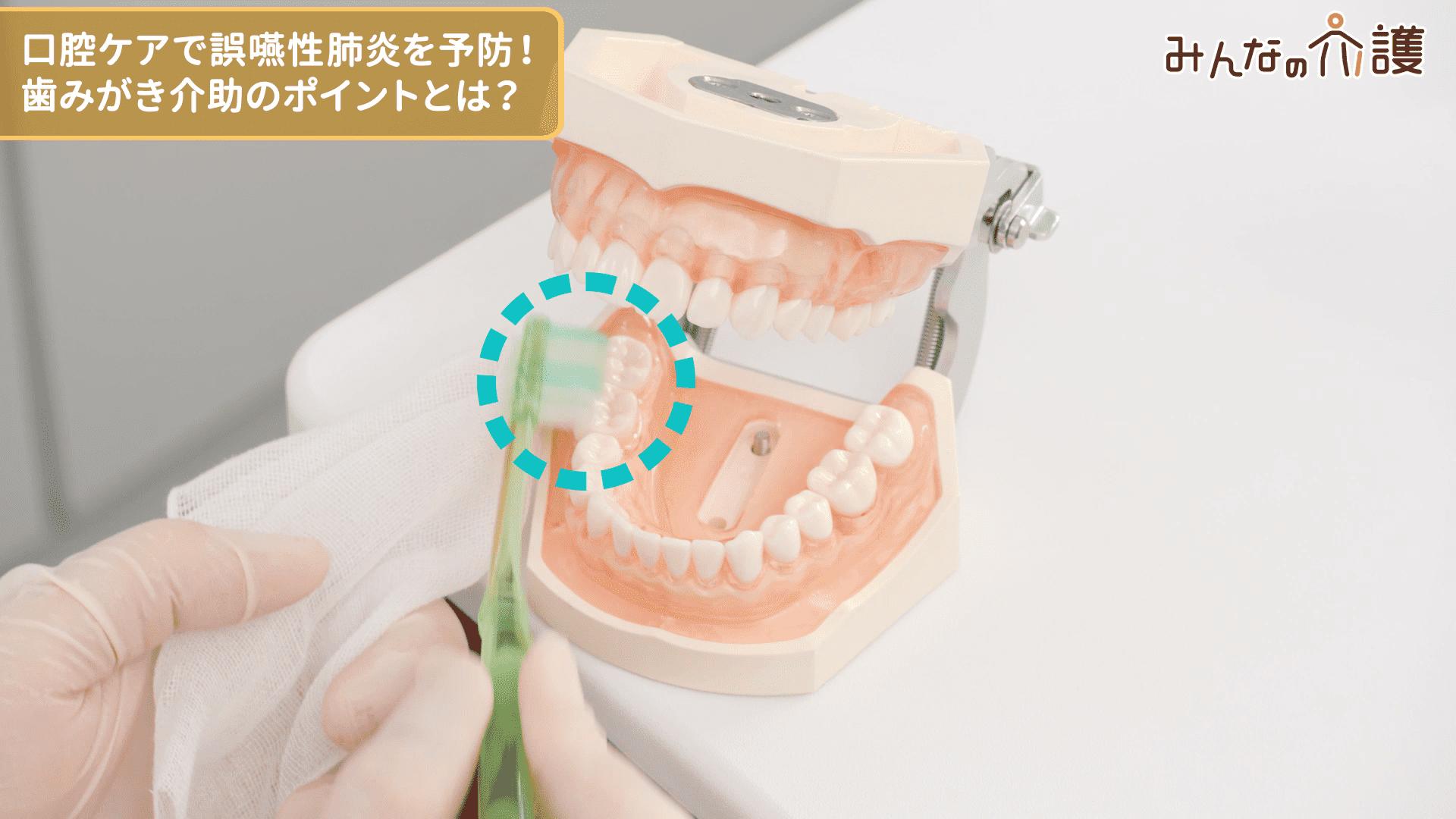 下の歯を磨く様子